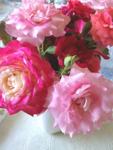 Roses_so_pretty